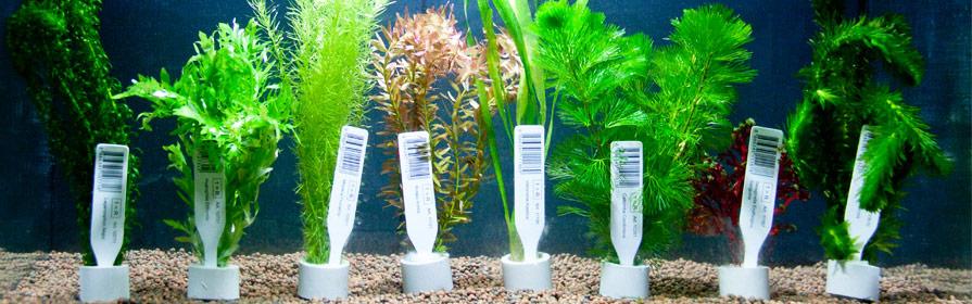 plastic aquariumplanten