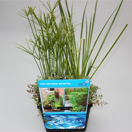 Mix mand waterplanten